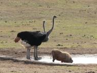 Webformat -South-Africa 2009a 0952