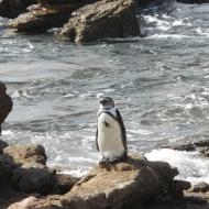 Webformat -South-Africa 2009a 2051